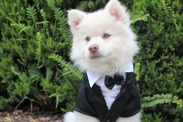 Humane Society Dog Fashion Show